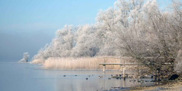 winter-see-frost